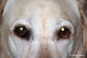 Eyes into a best friend's soul