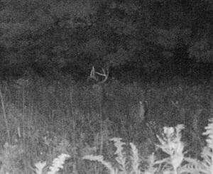 Trailcam image from Sept. 2012.