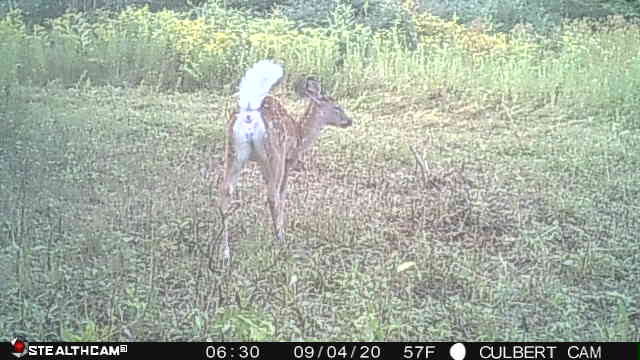 Fawn Falsh StealthCam